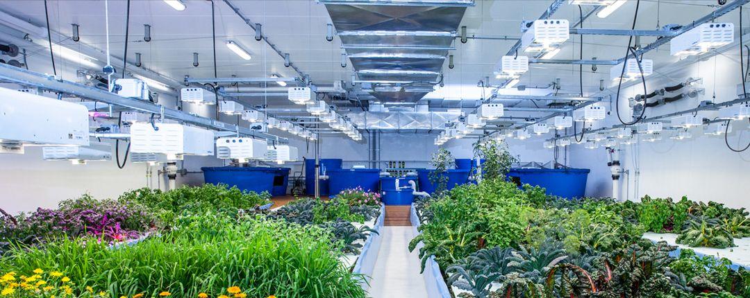 luces para invernaderos hidrofonia costa rica
